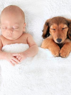 心理IN词:宠物依赖症