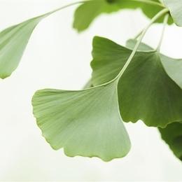 第93期:菜叶有洞蔬菜更安全吗?