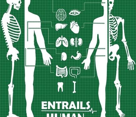 大脑和耳朵结构示意图