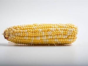 研究表明常吃玉米易得食道癌