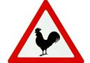 如何防治H7N9禽流感