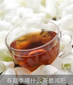 春夏季喝什么茶最减肥