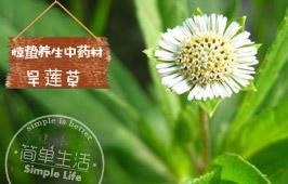 惊蛰养生中药材:旱莲草