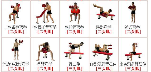 哑铃锻炼方法肌肉锻炼教学
