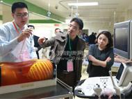 香港大学深圳医院急危重症医学床边超声工作坊