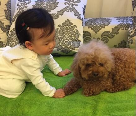 小玥儿和一只宠物狗在沙发上玩沙