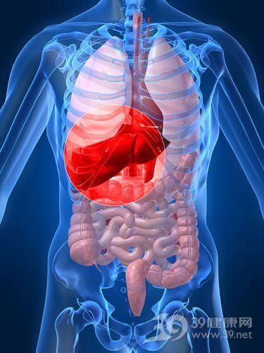 肝 肝脏 器官_1797164_xxl