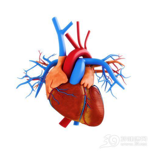 心脏 血管 器官 透视 立体_21186451_xxl