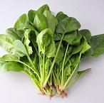 糖人的福星――菠菜