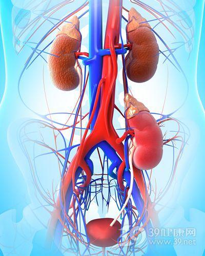 肾 肾脏 血管 器官 透视_14671229_xxl