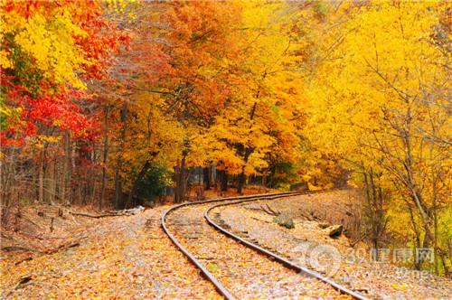 季节 秋天 树叶 枫叶 铁路_7267232_xl