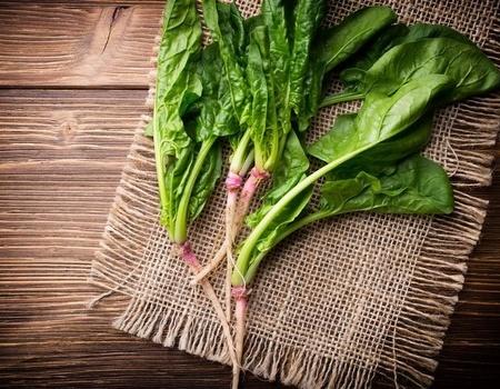 蔬菜-菠菜-青菜_28250598_xxl