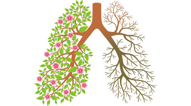 吃血防霾?告诉你吃什么才是真・清肺