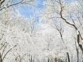 寒潮来袭男子凌晨雪中裸奔致青春