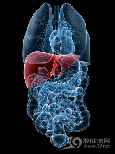 肝 肝臟 器官_3241297_xxl