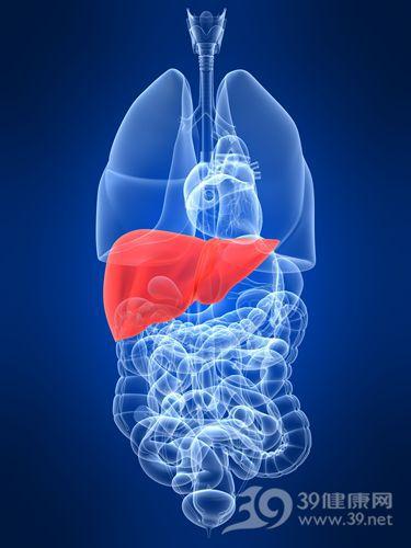 肝 肝脏 器官_4696211_xxl