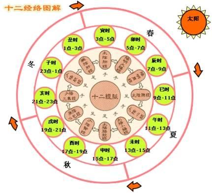 中医肩颈结构图