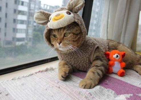 三个月大小猫感冒了怎么办,三个月大的猫咪感冒了