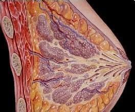 乳腺增生症的治疗_乳房纤维瘤的症状图片,乳房纤维瘤图片大全_乳房纤维瘤_39疾病百科