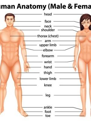女性身高体重标准表