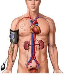 原发性直立性低血压