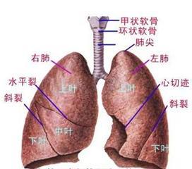 小儿肺栓塞