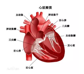 肺动脉瓣关闭不全