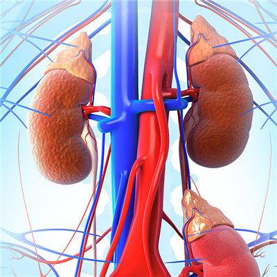 腎陽虛癥狀及治療