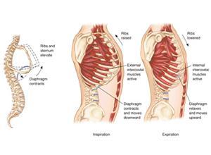 胸下肋骨骨折症状