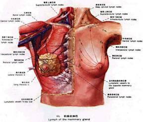 乳腺小叶增生