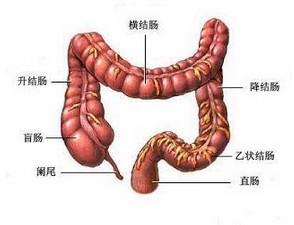 溃疡性直肠炎的检查方法有哪些