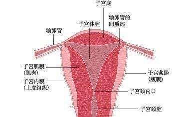 功能失调性子宫出血病