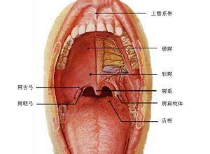 口腔结核性溃疡