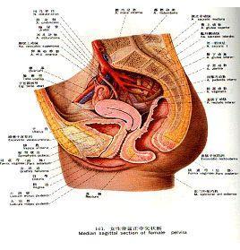 女性生殖器官创伤
