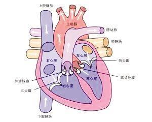 心脏瓣膜疾病
