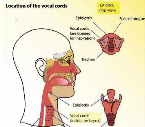 慢性单纯性咽炎