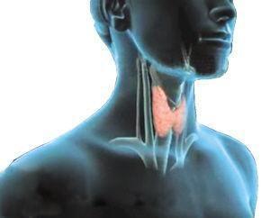 甲状腺血管瘤
