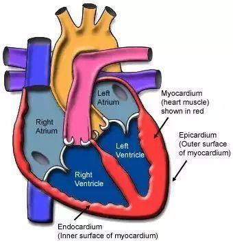 病毒性心肌炎
