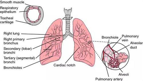 结核性胸膜炎
