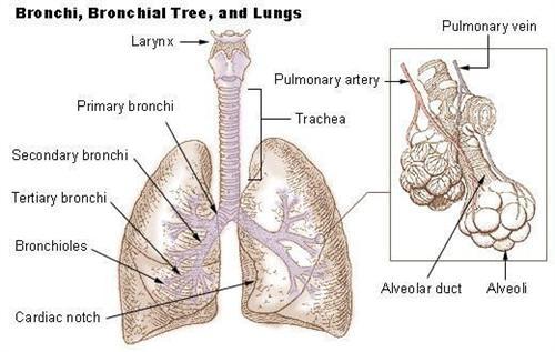 肺部良性肿瘤