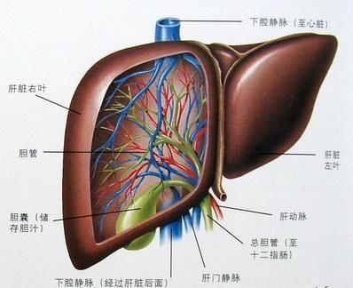胆汁性肝硬化