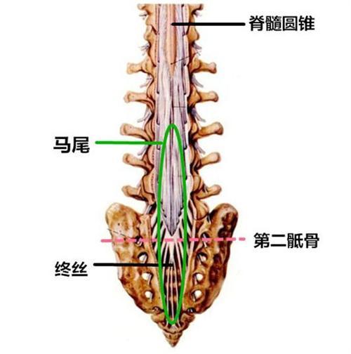 脊髓前综合征