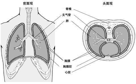恶性胸腔积液