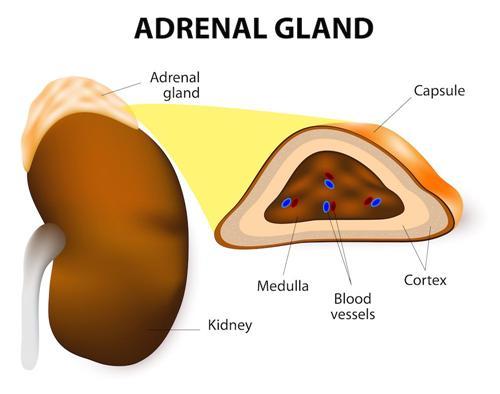 肾上腺皮质功能减退性心脏病
