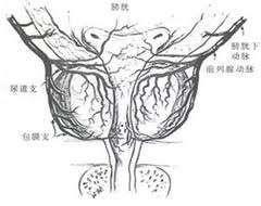 乳房棘球蚴病