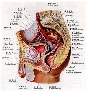 尿道综合征