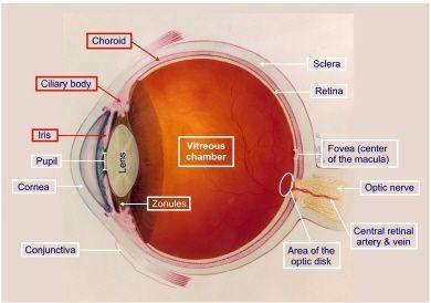 虹膜睫状体炎