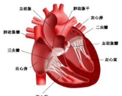 主-肺动脉间隔缺损