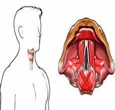 咽喉良性肿瘤