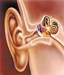 外耳道乳头状瘤